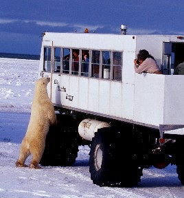 An encounter with a curious bear on the Tundra Buggy® -by Richard Day